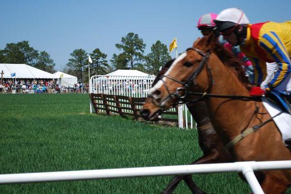 Cup race 2