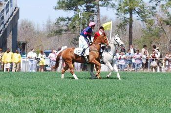 Cup horses 3