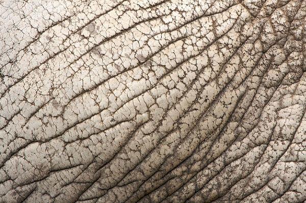 Zoo textures