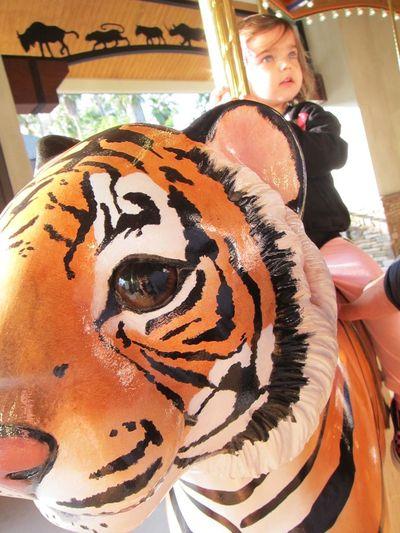 Tiger go round
