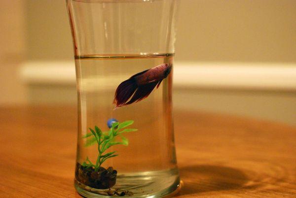 Mario fish