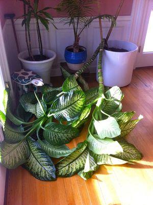 Plant attack2