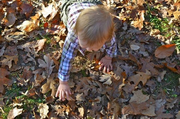 Thanksgiving crawling in leaves