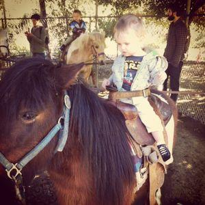 Pirate horse