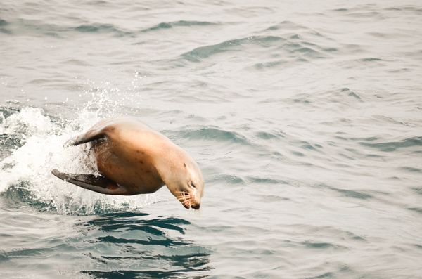 Whale watching sea lion