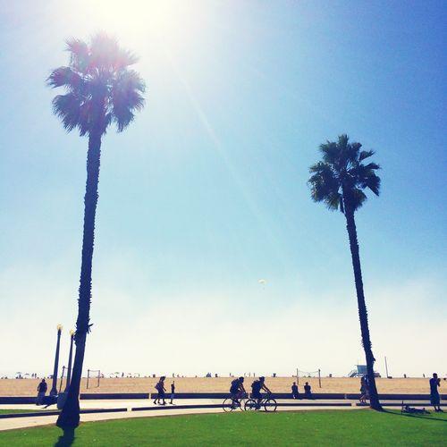 Sunday palm trees